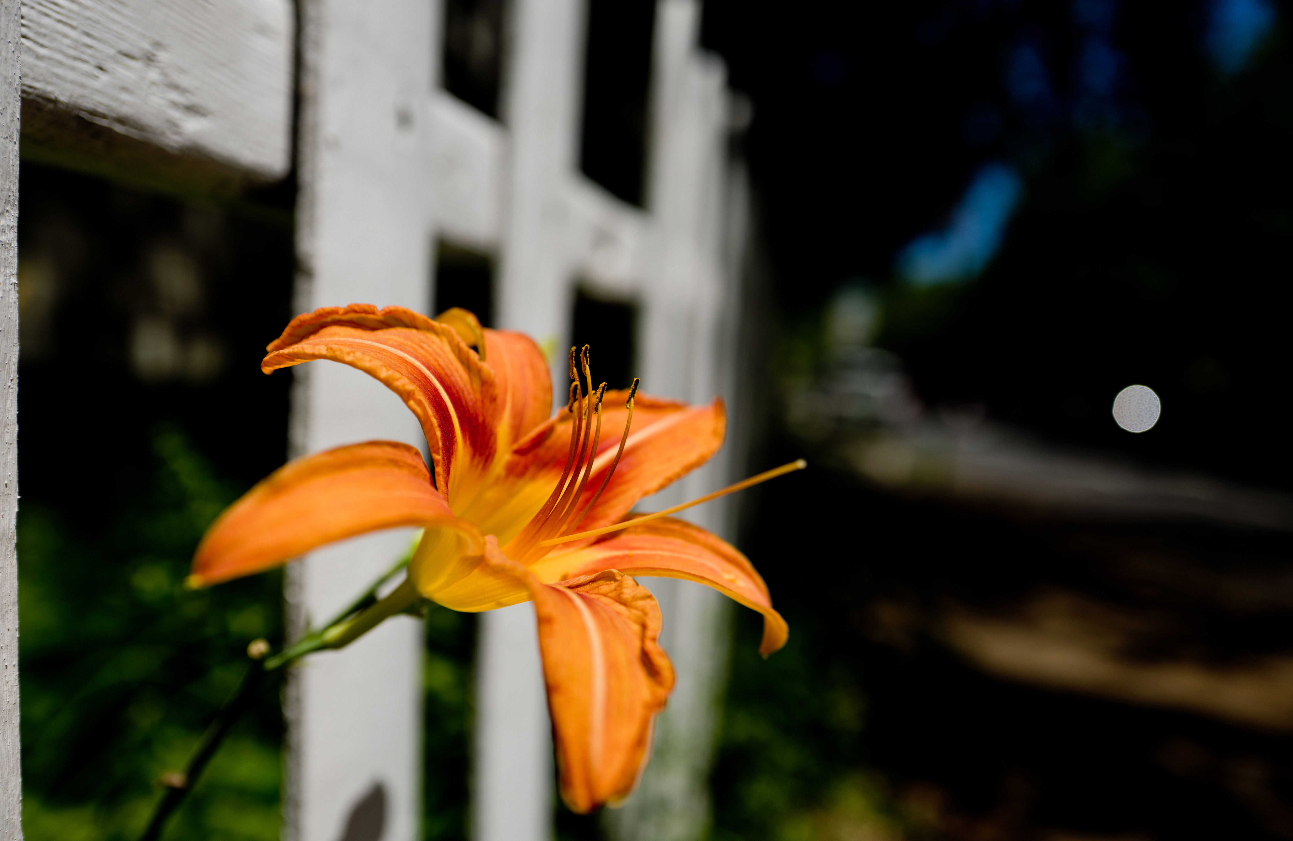A photo of a daylily taken by the Leica Q (Type 116).