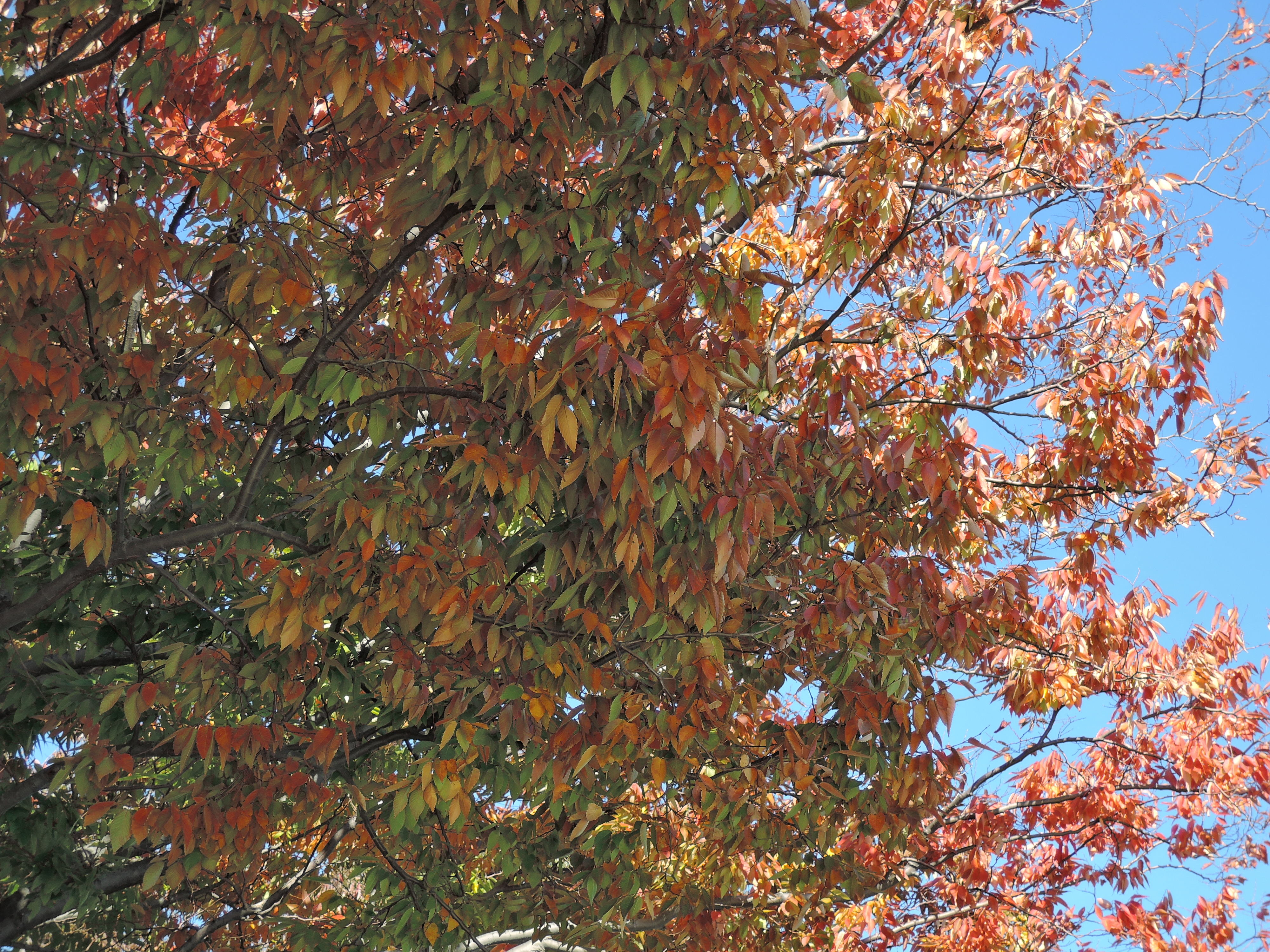 A sample photo of leaves taken by the Nikon Coolpix P340.