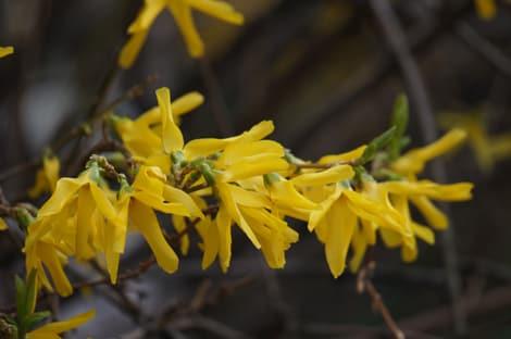 Flower Sample