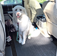 Dog in the F-150