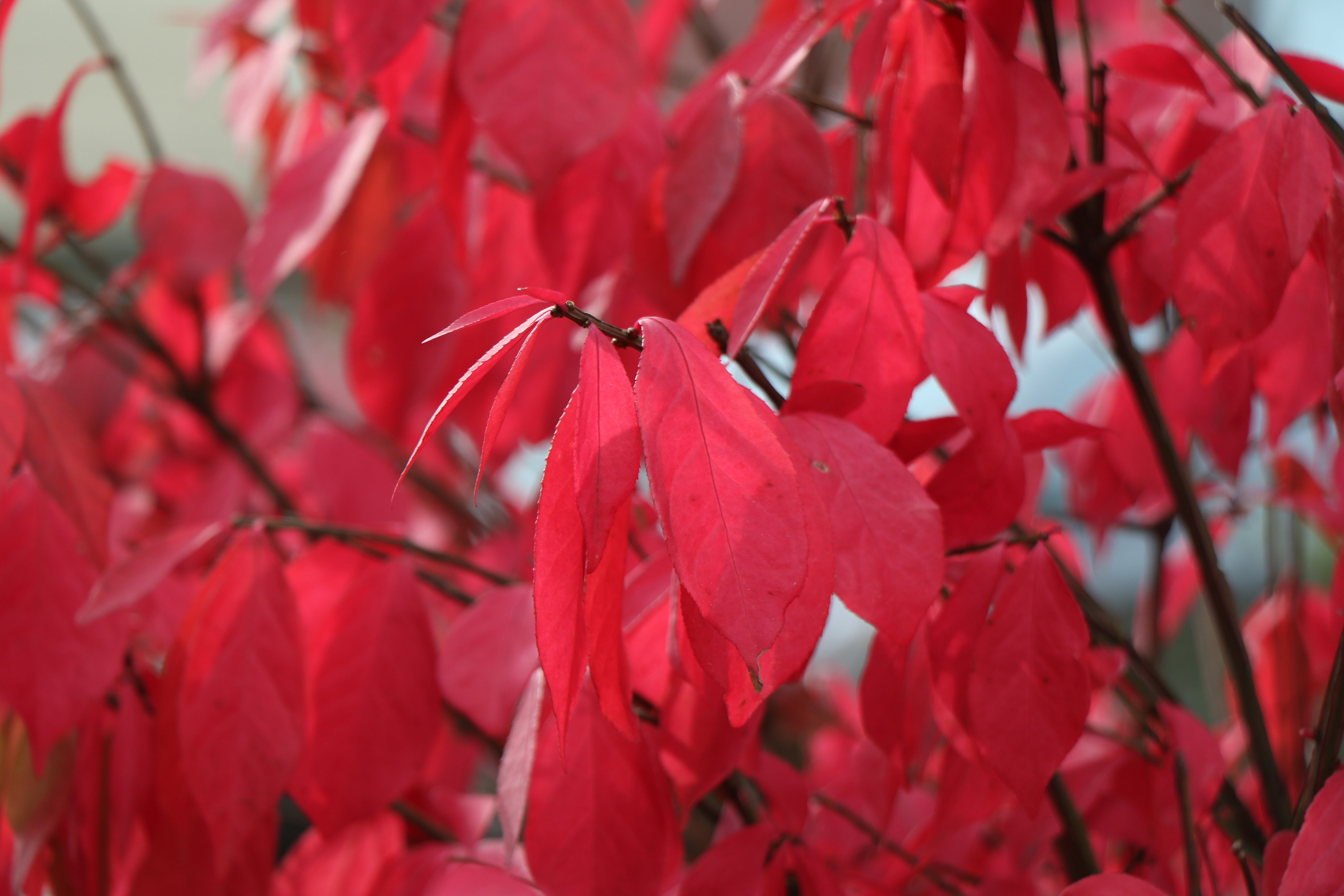 A sample photo of a burning bush taken by the Canon EOS 7D Mark II.