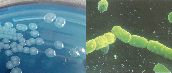 bacteria.png
