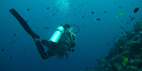 Diving-in-the-Bahamas.jpg