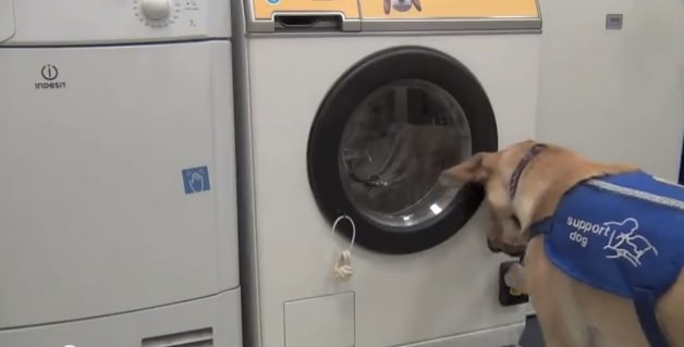 Woof to Wash.jpg