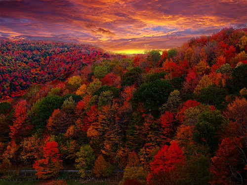 foliage-forestwander-flickr.jpg