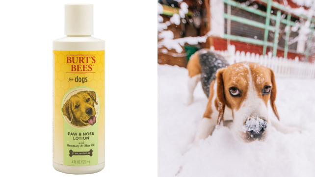 Burt's Bees Paws and Nose Lotion