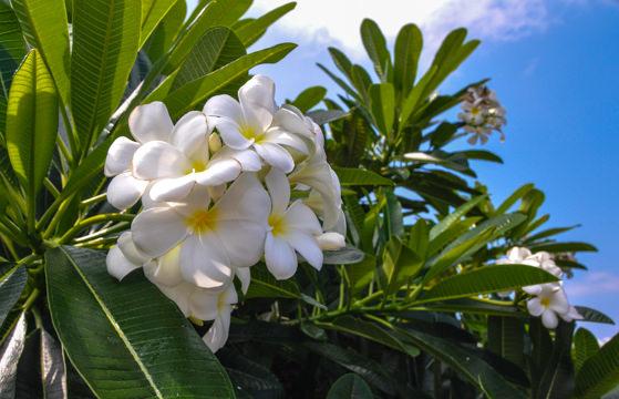 Hawaii Quick Guide-2.jpg