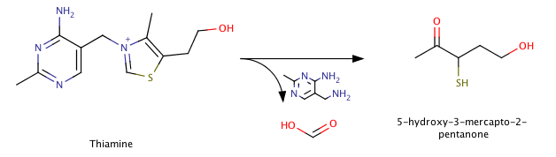 thiamine degradation.png