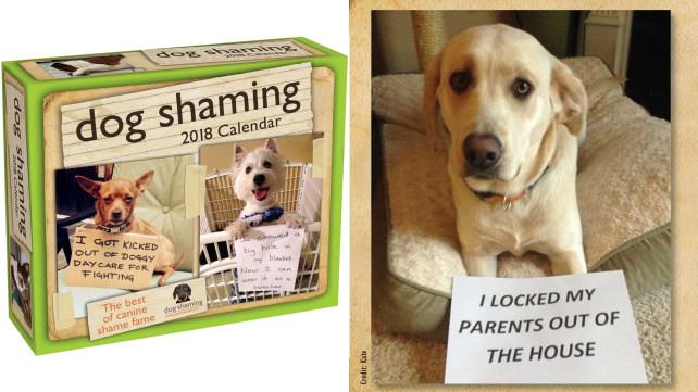 Dog Shaming Day-to-Day 2018 Calendar