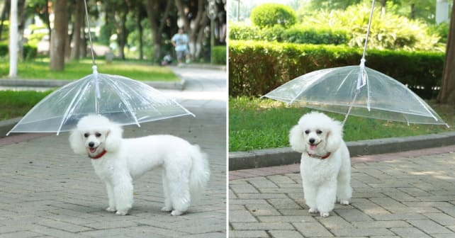Dog umbrella